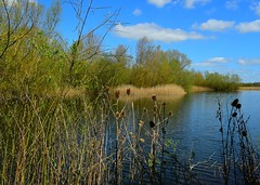 Stanwick lake (gillybooze) Tags: sky tree water weather clouds reeds outside landscapes vista allrightsreserved