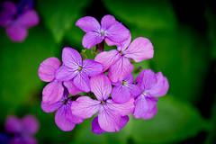 Spring is here (Dan Guimberteau) Tags: flower fleur correze treignac