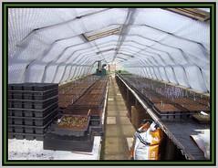 Tunnel of Light (Margaret Edge the bee girl) Tags: windows light plants spring warm shadows tomatoes tunnel plastic pots pa labels growing compost benches glasshouse bubblewrap trays