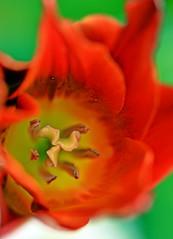 Spring 2016 - 822 LBG. (Lostash) Tags: life flowers plants nature spring flora seasons leicesterbotanicalgardens