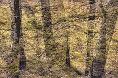 Park Life 32 (pni) Tags: park shadow flower tree grass suomi finland helsinki multipleexposure trunk helsingfors tripleexposure multiexposure lapinlahti skrubu pni lappviken pekkanikrus