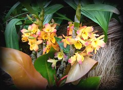 Yellow orchid spray (edenseekr) Tags: orchids longwoodgardens photopainting