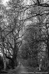 DSCF3374 (Klaas / KJGuch.com) Tags: trees tree forest blackwhite path bnw assen marsdijk xpro2