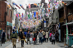 Carp Streamers in Kawagoe (AnotherSaru - Limited mode) Tags: japan japanese koi  carp nippon kawagoe  saitamaken koinobori  childrensday tangonosekku kodomonohi    saitamaprefecture