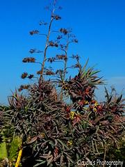 crazy cactus (claudia.joseph16) Tags: cactus plant photo crazy entangled