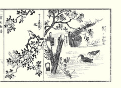 Left  rose and finch; Right  silktree and little grebe (Japanese Flower and Bird Art) Tags: flower bird art rose japan japanese book little picture rosa finch hayashi fabaceae grebe kitaro nihonga intaglio silktree fringillidae rosaceae albizia carduelis tachybaptus ruficollis julibrissin podicipedidae readercollection hirtula