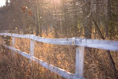 I wish I'd climbed over the fence (Tracey Rennie) Tags: autumn sun sunlight fall fence alberta grasses whitefence braggcreek