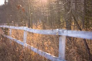 I wish I'd climbed over the fence