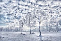 Boswachterij Dorst januari 2016 (cees van gastel) Tags: trees winter nature clouds landscape bomen skies nederland natuur wolken landschap noordbrabant dorst luchten sigma1020mm ntherlands ceesvangastel canoneos40d boswachterijdorst