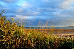 DSC_0016 (9) (RUMTIME) Tags: light nature water sand queensland coochie coochiemudlo