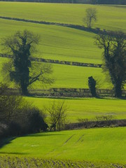 A Stack of Fields in Oxfordshire (cycle.nut66) Tags: leica trees winter green landscape lumix wheat hill panasonic fields slope hedges elmarit fz8