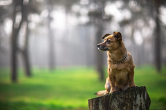 UGA (Marin Forcella Photography) Tags: park dog pets green colors animal fur lights concentration piewood