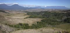 Gran Sabana (mstoecklin) Tags: gran sabana