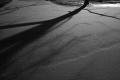 Tree Shadow (imjackhandy) Tags: road morning shadow snow tree haiku knoxville walk tennessee 575 theothermorning meadowlarklane theothermorningitstartedtosnow