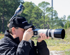 IMG_3458 (Bill Jelen) Tags: birding scrubjay rockledge