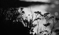 20150809-109_Overexposed Sunset Silhouettes (gary.hadden) Tags: sunset seascape landscape evening silhouettes overexposed saintmalo stmalo seedheads