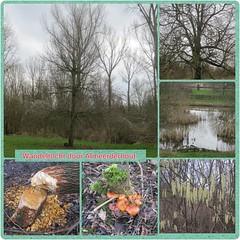 Almeerderhout (Marjan 8) Tags: trees forest photo bomen foto toadstool bos paddestoelen