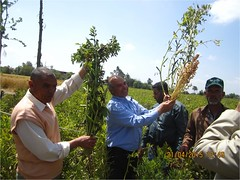 9-Pick (ICARDA-Science for Better Livelihoods in Dry Areas) Tags: farmers northafrica climatechange mena pulses ifad nutrition resilience drylands icarda incomes westasia croprotation seedsystems conservationagriculture euifad wheatlegumecroppingsystems