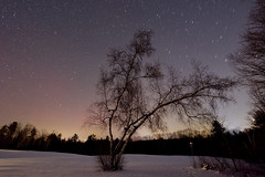Frozen in Time (mgestewitz) Tags: trees winter sky usa snow color tree art nature weather night forest stars landscape outside photography photo woods nikon newhampshire nh clear astrophotography nightsky