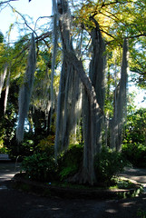 Jardin de Aclimatacion de Orotava (annamaart) Tags: jungle tenerife teneriffa canaryislands puertodelacruz kanariearna djungel