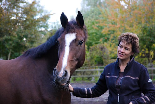 Horses Insight  (6)