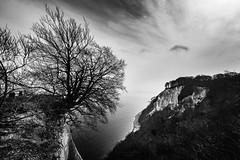 Knigsstuhl Rgen (Thomas Bechtle Fotografie) Tags: sea blackandwhite tree urlaub baltic ostsee baum kreidefelsen schwarzundweis rgen knigsstuhl kste