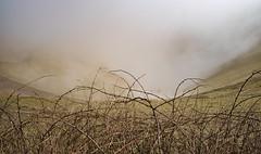 Mist in Devils Dyke (Louise Sullivan Photography) Tags: mist landscape brighton earlymorning devilsdyke southdownsnationalpark
