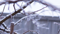 (La19EightyTwo) Tags: storm ice 50mm bokeh outdoor depthoffield freeze icicles sleet amateurphotography sonynex7