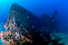 Seamaster (ShaunMYeo) Tags: scubadiving wreck seamaster gibraltar wrecks calpe underwaterphotography جبل gibilterra ikelite artificialreef طارق גיברלטר 直布罗陀 гибралтар γιβραλτάρ gibraltár الطارق cebelitarık gjibraltar ĝibraltaro hibraltar xibraltar giobráltar gibraltārs gibraltaras ġibiltà जिब्राल्टर ஜிப்ரால்டர் జిబ్రాల్టర్ ยิบรอลตา جبرالٹر גיבראַלטאַר गिब्राल्टर জিব্রাল্টার 直布羅 陀જીબ્રાલ્ટર ジブラル
