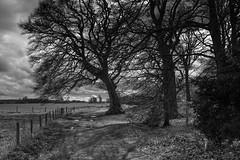 STONEHENGE AND SALISBURY-7 (Steve Mepsted) Tags: friends walks stonehenge vamuseum x100s