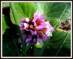 Flowers (Marty_0722) Tags: flowers plants primavera nature grass spring natura erba fiori piante