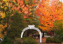 Honour Gardens (sandraarrell) Tags: autumn bluemountains nsw april lawson anzacday 2016 sandraarrell honourgardens