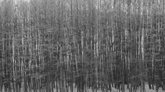 Modulation_96564 (tombomba2) Tags: wood trees blackandwhite bw plants colors zeiss forest bayern deutschland blackwhite pflanzen apo fullresolution schwarzweiss wald bäume farben lenses 135mm altdorf sonnar f20 objektive 13520