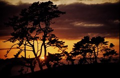 sunset out in the wop wops (paddy_bb) Tags: travel sunset newzealand tree silhouette 1984 bume waiuku southauckland paddybb