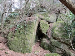 Knowle Rocks the Giant Tor SX 7915 8088 (Bridgemarker Tim) Tags: rocks dartmoor tors knowle devonwoods