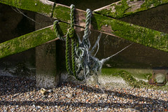 Thames Walk April 2016 (13 of 14) (johnlinford) Tags: urban seaweed london thames timber rope thamespath canonefs1022 canoneos7d