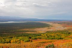 Denali National Park is an amazing place to visit (Mark Harris photography) Tags: travel mountain alaska canon ak denali sceney