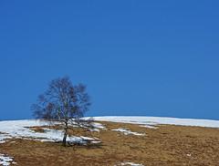 Solo Tu (Giuliana 57) Tags: sky panorama tree alberi reflex colore cielo neve campo terra albero azzurro landescape paesaggio celeste solotu nikond5200 giuliana57 giulianacastellengo