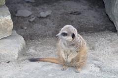 Edinburgh zoo (PhylB) Tags: edinburghzoo