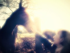 Moment in love (jeanchristophedonze) Tags: horse cheval tenderness