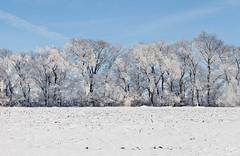 Between Fields (Zack Mensinger) Tags: winter minnesota eos midwest frost hoarfrost 2016 westernminnesota canon5dmarkii