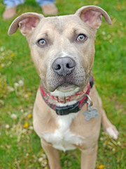 Romeo_01 (AbbyB.) Tags: rescue dog pet newjersey canine shelter adopt shelterpet petphotography easthanovernj mtpleasantanimalshelter