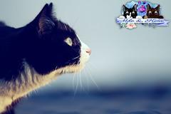 Milo (celina.weiser) Tags: sky flower love nature cat canon germany deutschland kitten sweet himmel photograph german katze taube kater vogel