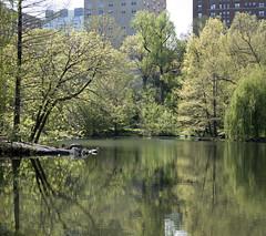 Pool Panorama II (Joe Josephs: 2,650,890 views - thank you) Tags: nyc newyorkcity travel spring centralpark manhattan centralparknewyork springtime urbanlandscapes fineartphotography travelphotography urbanparks outdoorphotography springcolor fineartprints joejosephs joejosephsphotography