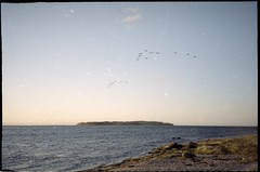 (anjamation) Tags: unaltered scanfromfilm 135film canonprimazoom65 kodakgold200 april 2016 sunset birds graylaggeese island vformation colornegativefilm theocean canonpixmamp800 developedbynvfoto