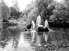 Mini waterfall (josefinenylander) Tags: city blackandwhite cats cute nature cat documentary