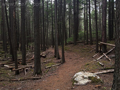 """John's Lake Loop Trail • <a style=""""font-size:0.8em;"""" href=""""http://www.flickr.com/photos/63501323@N07/26712344265/"""" target=""""_blank"""">View on Flickr</a>"""