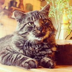 2015-08-15_1439659210 (Mama Gipsy) Tags: arte natureza artesanato gatos mama gipsy