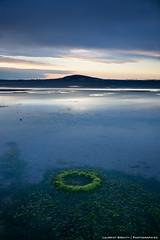 Algae Hole (laurent.brouty) Tags: light water zeiss sunrise landscape eau sony algae 24mm paysage tang algues waterscape a6000
