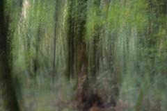 Mount Talbert (Tony Pulokas) Tags: autumn blur tree fall oregon forest portland moss maple bokeh motionblur tilt camerashake hazelnut bigleafmaple mttalbert intentionalcameramovement mounttalbert mounttalbertnaturepark